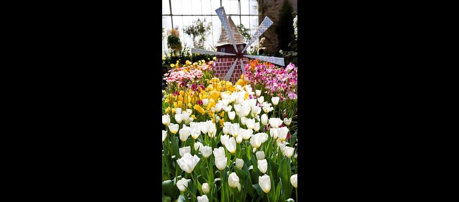 New Zealand Gardens Trust - Auckland
