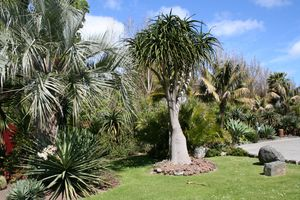 Totara Waters Subtropical Garden